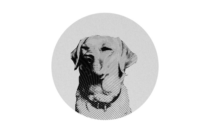 dog02
