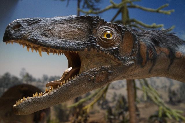 prehistoric-times-urtier-museum-exhibit-161959